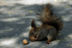 squirrel-300x200