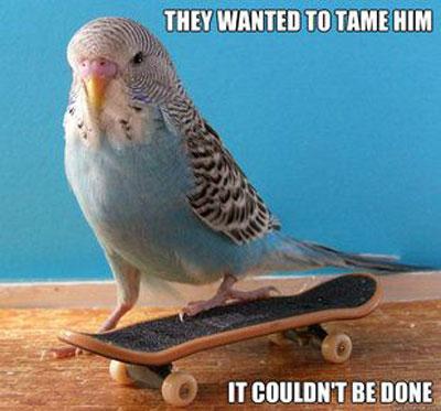 best-pet-bird