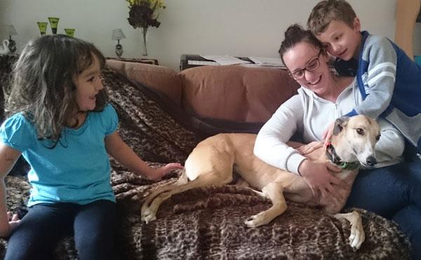 Photo of Greyhound adoption – Story of The Sad and Lonely Greyhound
